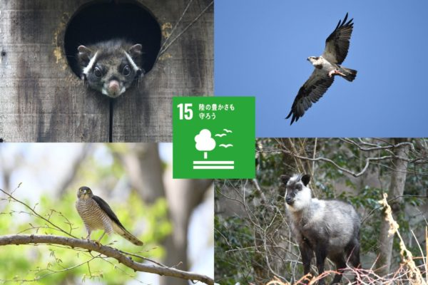 生物多様性とSDGs!みんながつながって生きている!【 ゴール15 】